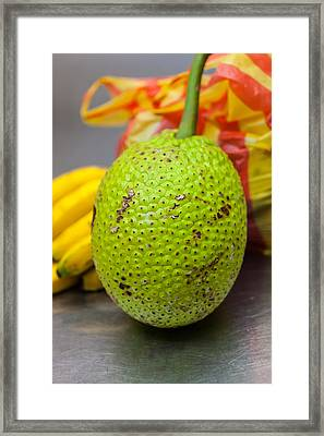 Soursop Or Guanabana Framed Print by Craig Lapsley