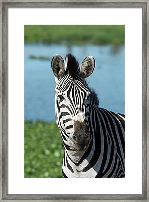 South Africa, Durban Framed Print