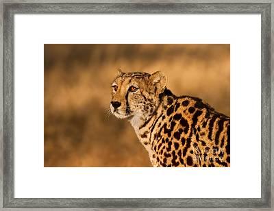 South African Queen Framed Print