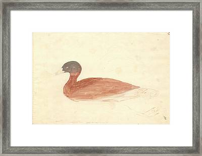 South African Shelduck Framed Print by Natural History Museum, London