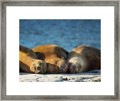 South America, Argentina, Chubut Framed Print by Jaynes Gallery