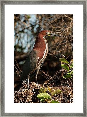 South America, Brazil, Pantanal Framed Print