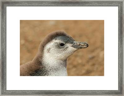 South America, Chile, Patagonia, Isla Framed Print by Jaynes Gallery