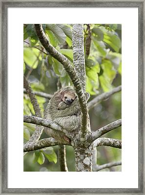 South America, Costa Rica, Provincia De Framed Print by Jaynes Gallery
