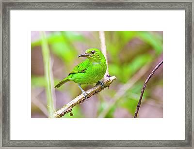 South America, Costa Rica, Sarapiqui Framed Print by Jaynes Gallery