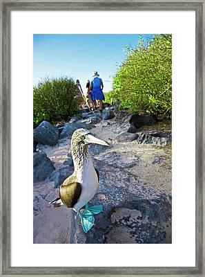 South America, Ecuador, Galapagos Framed Print by Miva Stock