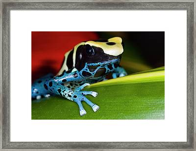 South America, Republic Of Surinam Framed Print by Jaynes Gallery