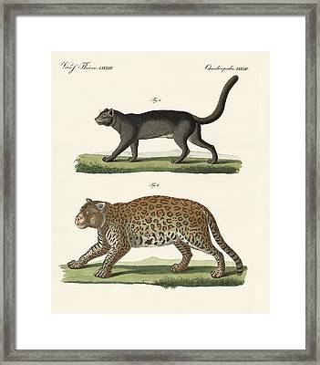 South American Animals Framed Print