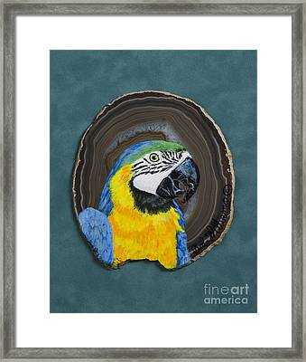 South American Beauty Framed Print