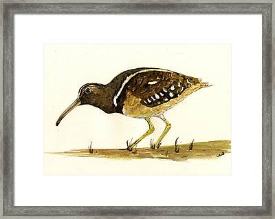 South American Painted Snipe Framed Print