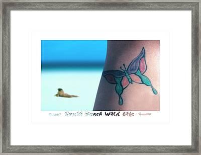 South Beach Wild Life Framed Print by Mike McGlothlen