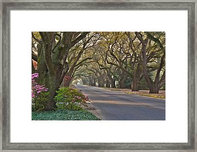 South Boundary In Spring Framed Print