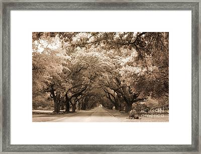 South Carolina Sepia Oak Trees Nature Landscape Framed Print by Kathy Fornal