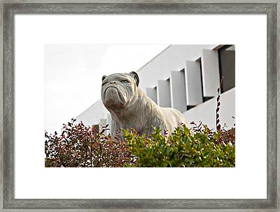 South Carolina State University Bulldog Framed Print