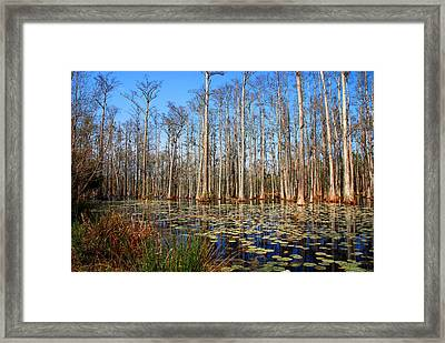 South Carolina Swamps Framed Print