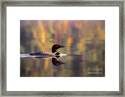 South Cove Loon Framed Print by Jim Block