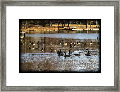South For The Winter Framed Print