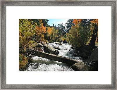 South Fork Bishop Creek Framed Print