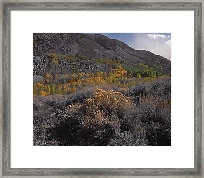 South Fork Valley Gold Framed Print