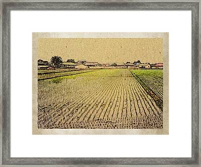 South Korea Rice Paddy Framed Print by Dennis Buckman