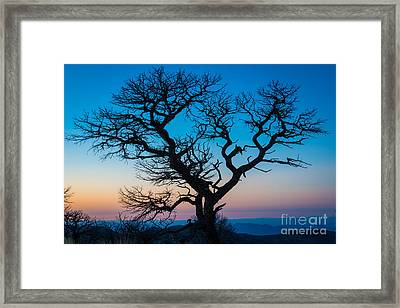 South Rim Tree Framed Print