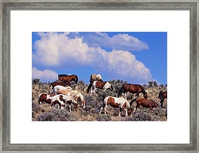 South Steens Feral Horses Framed Print