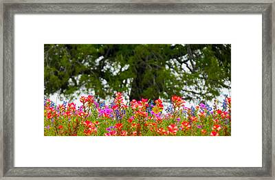 South Texas Blend Framed Print by David  Norman