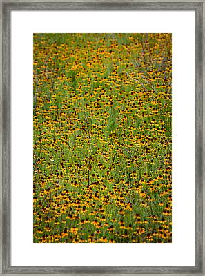 South Texas Mosiac Framed Print