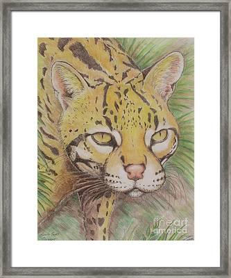 South Texas Ocelot Framed Print by Sue Bonnar