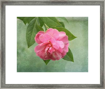 Southern Camellia Flower Framed Print
