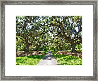 Southern Charm Framed Print by Eve Spring