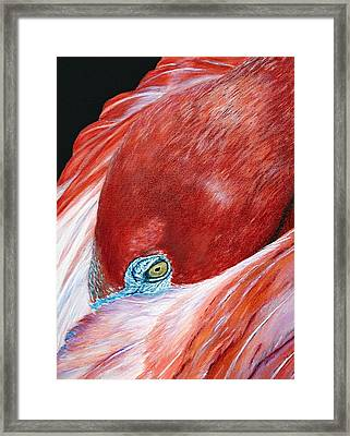 Southern Comfort Flamingo Framed Print by Donna Proctor