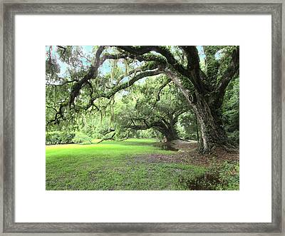 Southern Comfort Framed Print by Silvie Kendall