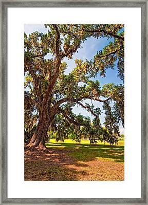 Southern Comfort Framed Print by Steve Harrington
