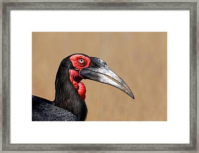 Southern Ground Hornbill Portrait Side View Framed Print by Johan Swanepoel