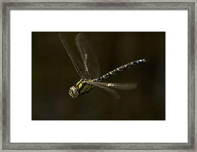 Southern Hawker Dragonfly In Flight Framed Print