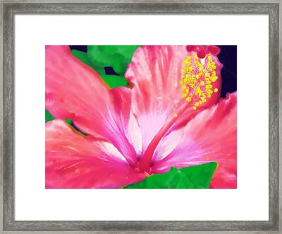Framed Print featuring the photograph Southern Hibiscus by Diane Miller