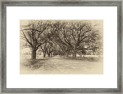Southern Journey Sepia Framed Print by Steve Harrington