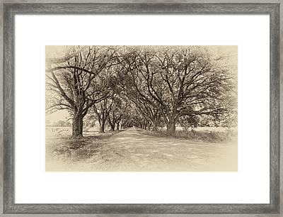 Southern Journey Sepia Framed Print by Steve Harrington