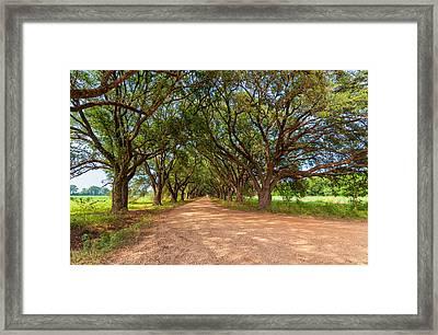 Southern Journey Framed Print by Steve Harrington