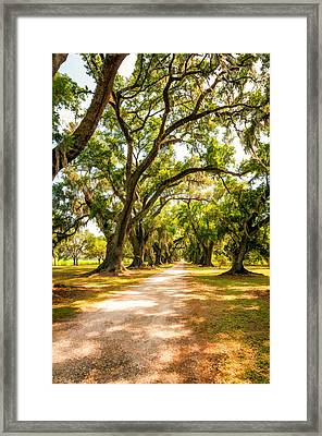 Southern Lane 2 Framed Print by Steve Harrington