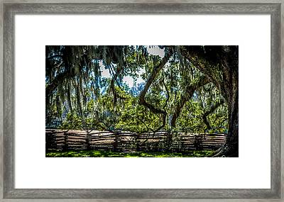 Southern Live Oak Tree And Wooden Fence Framed Print by Optical Playground By MP Ray