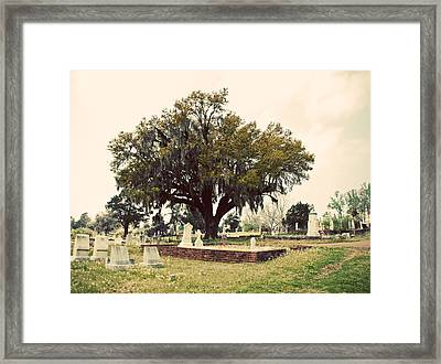 Southern Moss Framed Print by Max Mullins