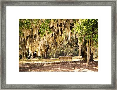 Southern Tree Framed Print