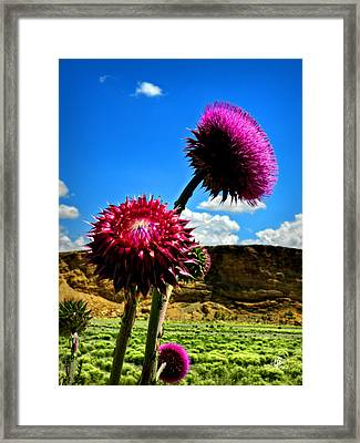 Southern Wyoming 003 Framed Print