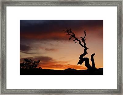 Southwest Tree Sunset Framed Print by Michael J Bauer