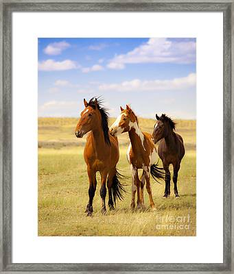Southwest Wild Horses On Navajo Indian Reservation Framed Print