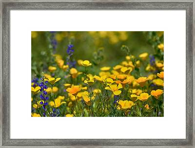 Southwest Wildflowers  Framed Print by Saija  Lehtonen
