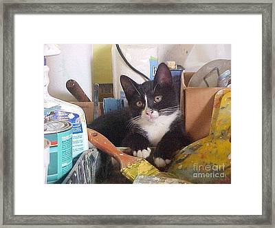 Sox The Kitty Artist Framed Print by Robert Stagemyer