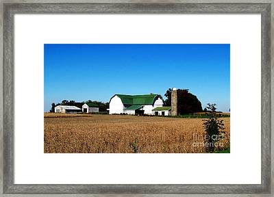 Soybean Farm Framed Print by Tina M Wenger